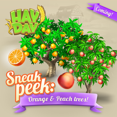 Hay day maj sneak peek arbre orange peche
