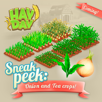 Hay day maj sneak peek oignon culture the
