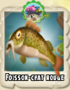 Poisson chat rouge