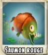 Saumon rouge