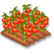 Tomates champ hay day